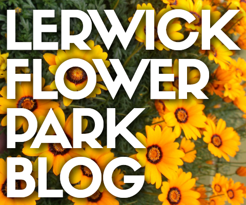 Lerwick flower park blog